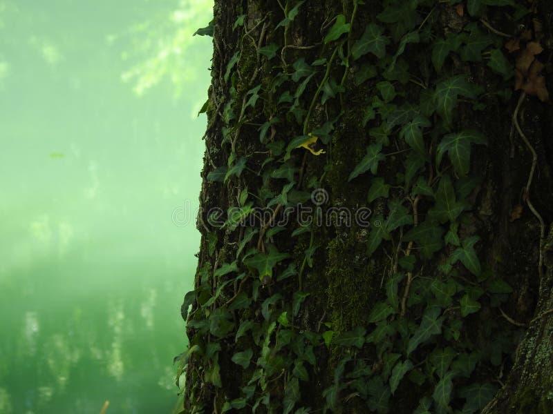 Les couleurs vertes des montagnes photos stock