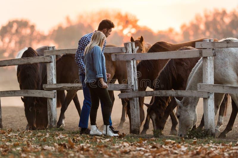 Les couples dans l'amour apprécient le jour dans la nature et les chevaux image libre de droits