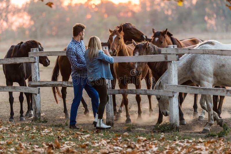 Les couples dans l'amour apprécient le jour dans la nature et les chevaux photographie stock libre de droits