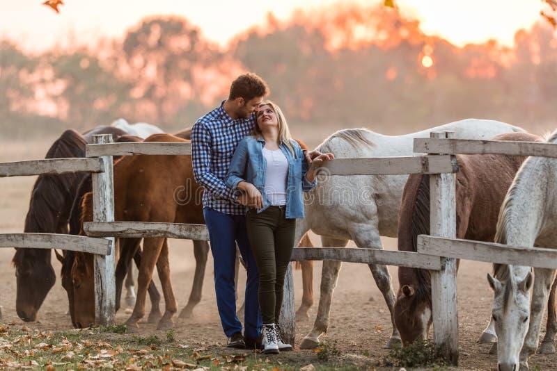 Les couples dans l'amour apprécient le jour dans la nature et les chevaux photo libre de droits