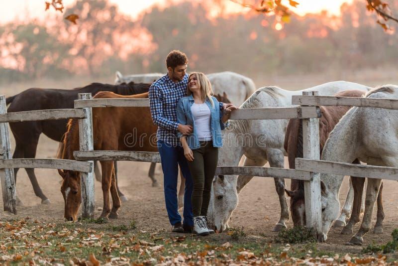 Les couples dans l'amour apprécient le jour dans la nature et les chevaux photo stock
