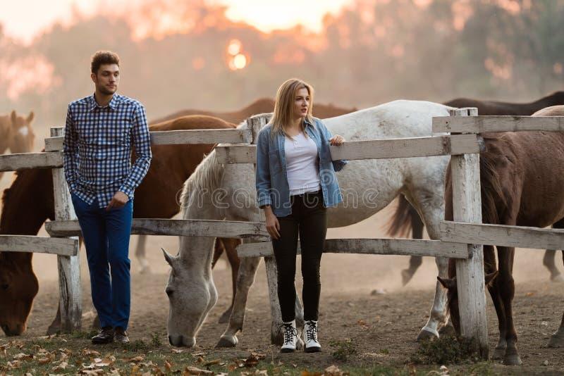 Les couples dans l'amour apprécient le jour dans la nature et les chevaux images libres de droits