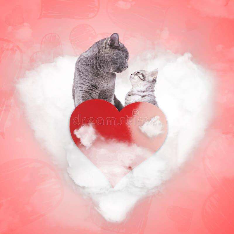 Les couples romantiques des chats sur un amour opacifient photos stock