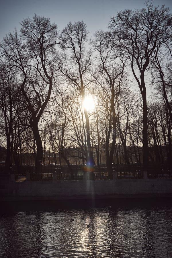 Les coupures de rayon du coucher du soleil du soleil par les branches des arbres d'automne photos stock