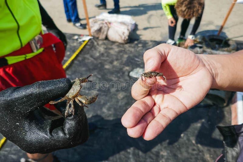 Les crabes sauvés des déchets marins, le concept de conservation de l'environnement photographie stock libre de droits