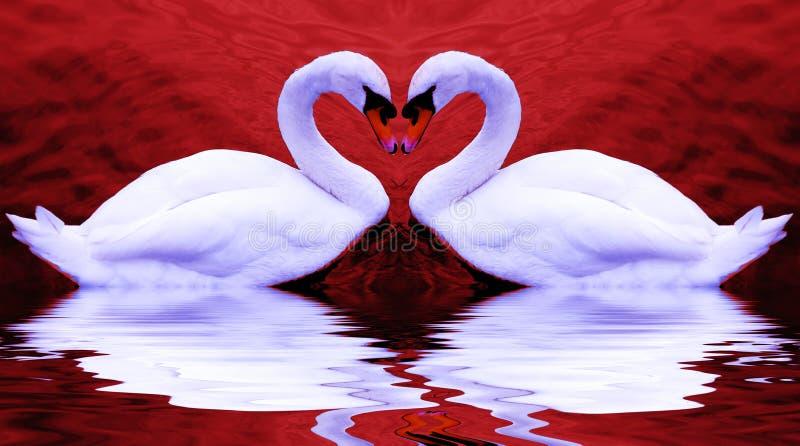 Les cygnes de Valentine photographie stock libre de droits