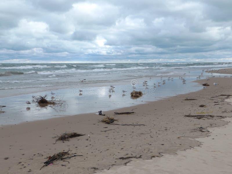 Les débris ont lavé l'uo sur la plage photographie stock libre de droits
