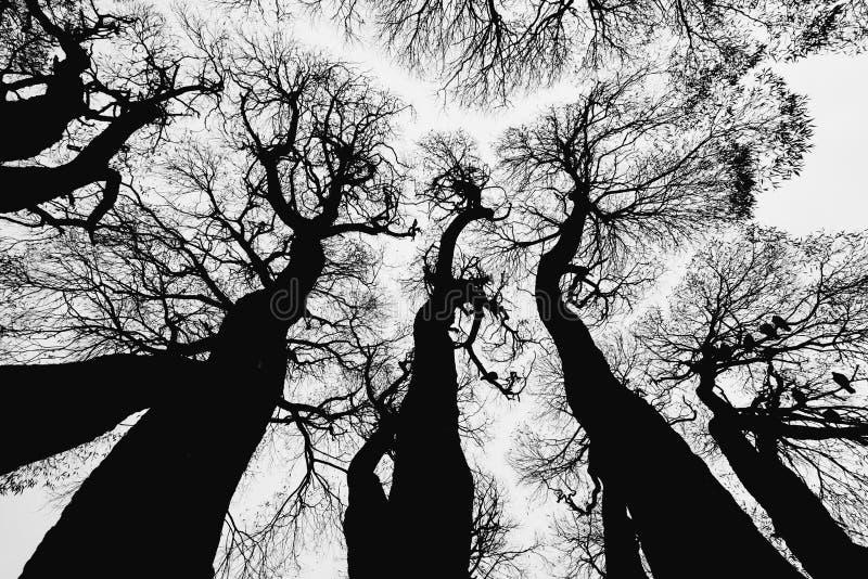 Les découpes des arbres contre le ciel image stock