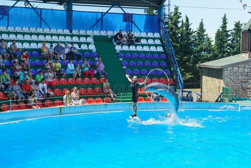 Les dauphins de bottlenose de dauphins de Bottlenose sont grands, ou lat Le truncatus de Tursiops parlent avec l'entraîneur dans  photos libres de droits