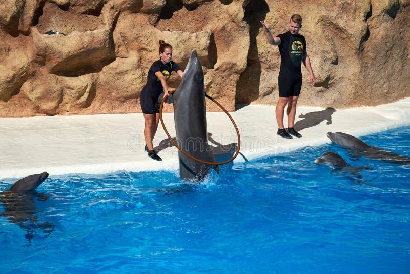 Les dauphins montrent dans le parc de Loro Loro Parque l'espagne image stock