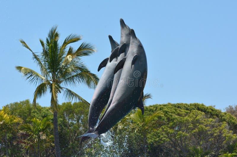 Les dauphins saute dans le ciel images libres de droits