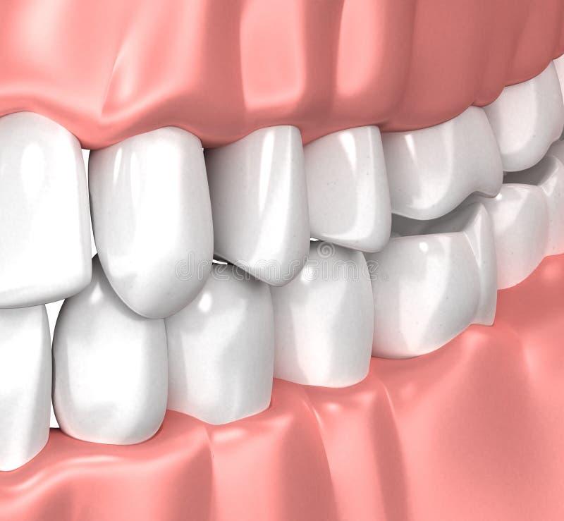 Les dents collent l'anatomie humaine de bouche - l'illustration 3d illustration de vecteur