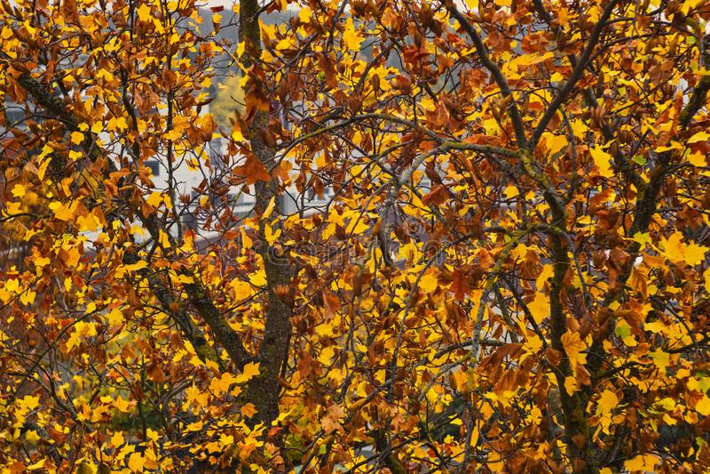 Les derniers jours de l'automne image libre de droits