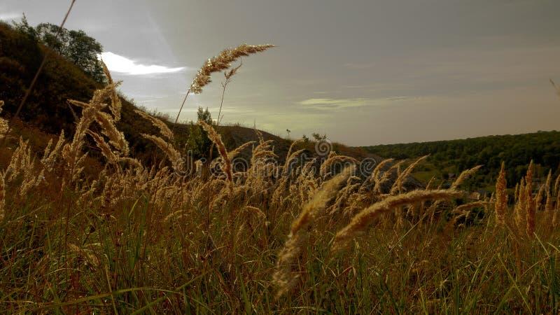les derniers rayons du contact de coucher de soleil les transitoires d'herbe photographie stock