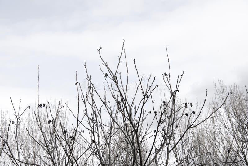 Les dessus d'arbre silhouettent photographie stock