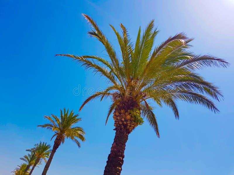 Les dessus des palmiers contre le ciel d'été photo libre de droits