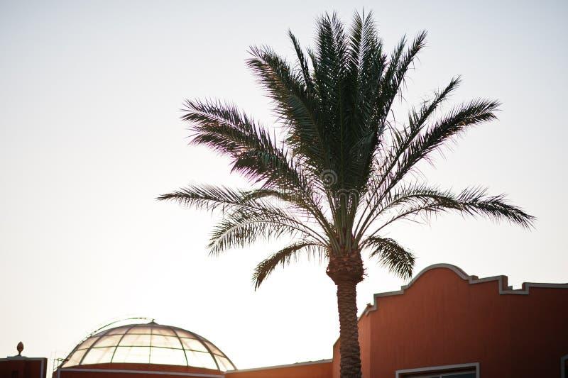 Les dessus du ciel de soirée de fond de palmier sur le coucher du soleil photographie stock