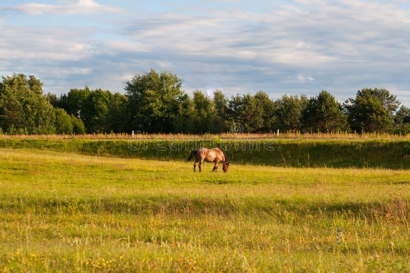 Les deux chevaux dans la couleur brune mangeant des herbes sur la pelouse avec l'arbre vert sur le fond photos stock