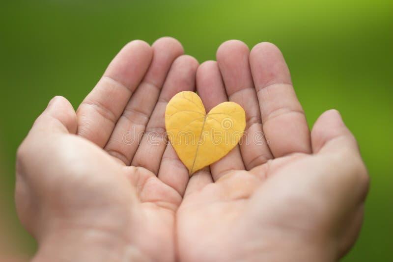Les deux mains en gros plan tiennent une feuille en forme de coeur jaune images libres de droits