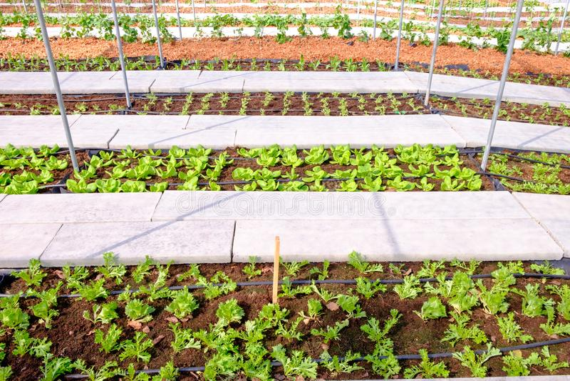 Les divers types de légumes frais plantés dans les légumes tracent photo libre de droits