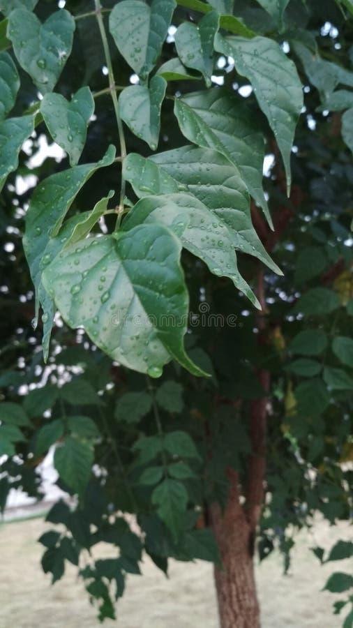 Les douches de pluie de gouttes de pluie arrosent le sweetu de nature photos stock