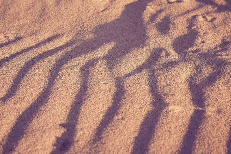 Les dunes à sable jaune donnent une consistance rugueuse avec les ombres bleues profondes image libre de droits
