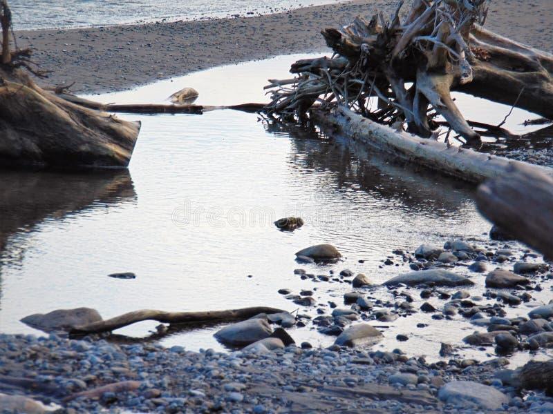 Les eaux de palourde image libre de droits