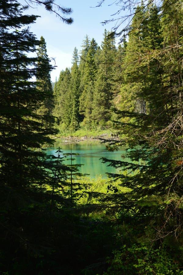 Les eaux en bois de tête de rivière monte en Jackson Kimball State Park, l'Orégon et écoulements vers le bas vers le lac agency I image libre de droits