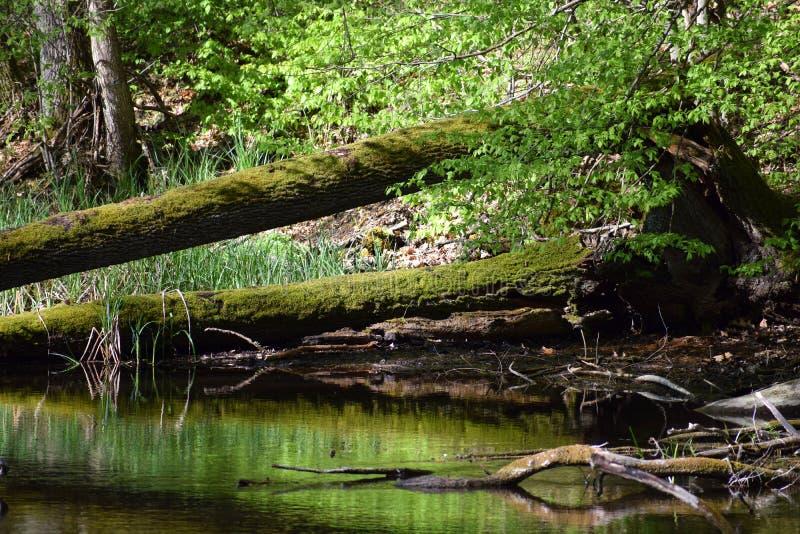 Les eaux souterraines dans les bois au printemps photo stock