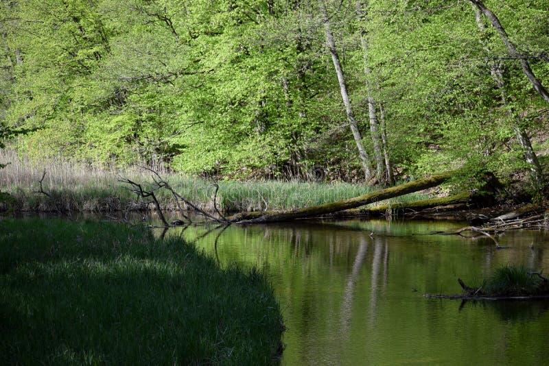 Les eaux souterraines dans les bois au printemps image stock