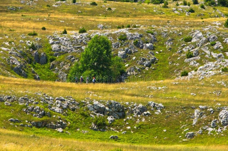 Les effondrements de Karst, détail de agacent le paysage de plateau image libre de droits