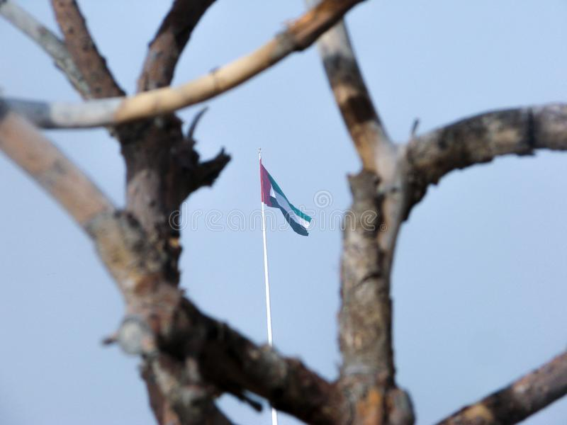 Les Emirats Arabes Unis marquent l'ondulation dans l'affichage derrière des branches d'arbre photographie stock libre de droits