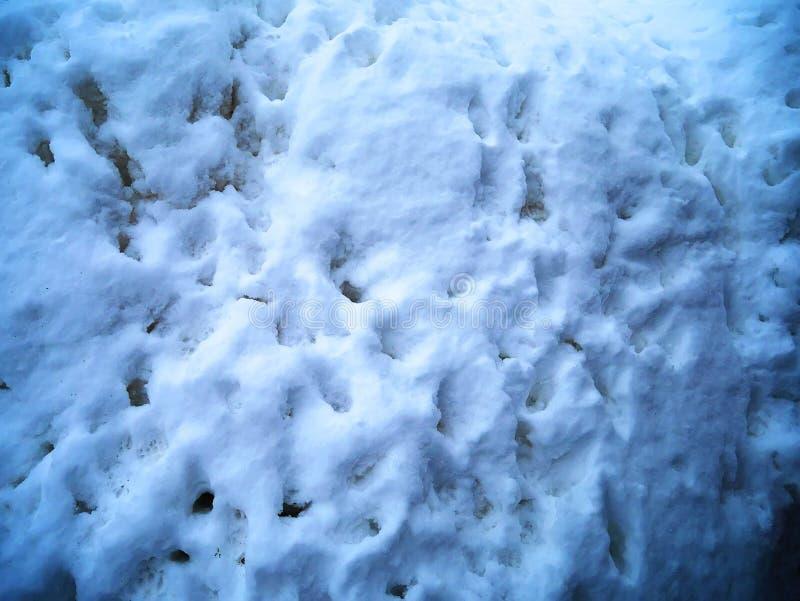 Les empreintes de pas d'humain et de chien l'hiver blanc extérieur neigent Vue supplémentaire Texture de la surface de neige Fond image libre de droits