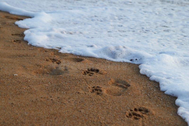 Les empreintes de pas des peuples et des chiens sur le sable échouent près à la mer photographie stock