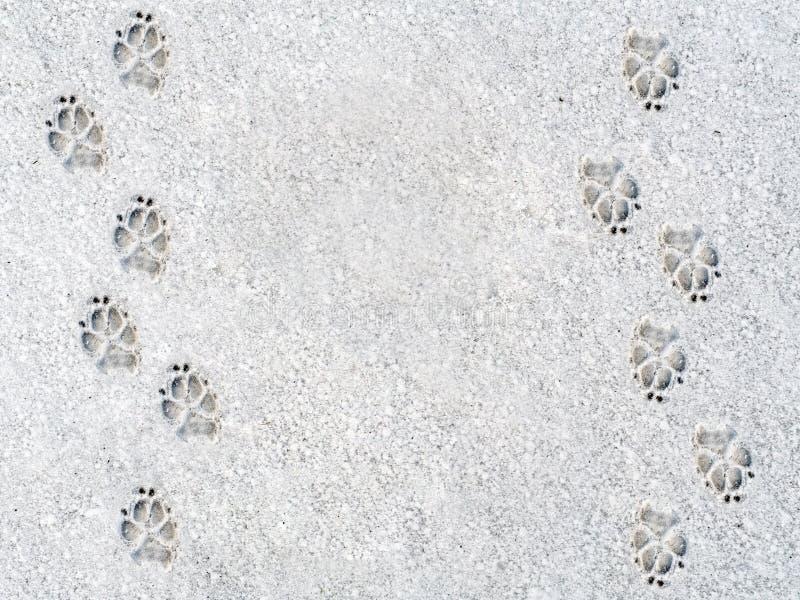 Les empreintes de pas du chien sur la neige photographie stock