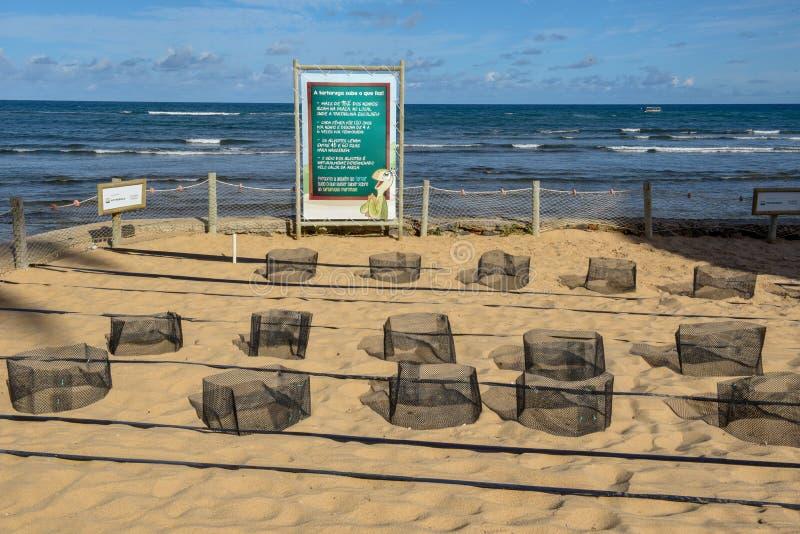 Les endroits consacrés à la naissance des tortues au projet de Tamar sur le Praia font le forte, Brésil images stock