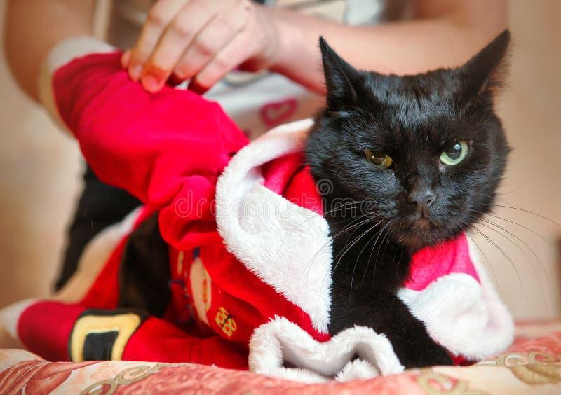 Les enfants habillent le chat noir dans le costume de Santa image libre de droits