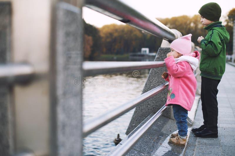 Les enfants nourrissent les canards dans le parc photos stock