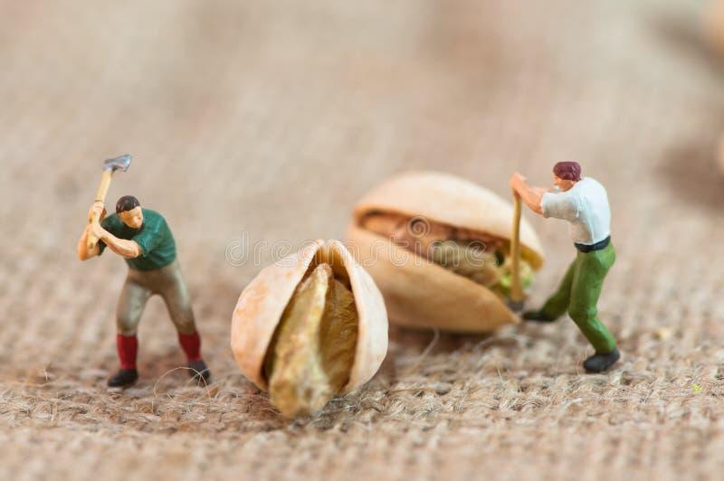 Les enregistreurs miniatures ont coupé des pistaches image stock