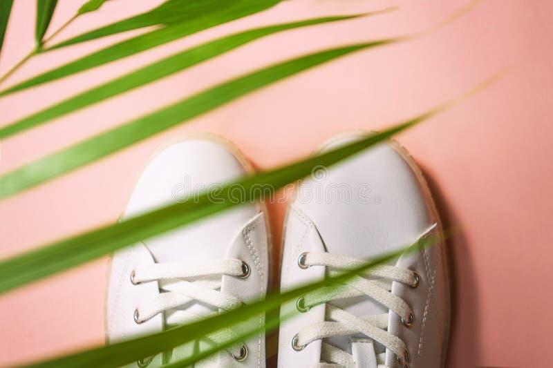 Les espadrilles blanches se trouvent sous la nuance du palmier sur le fond de corail rose photos libres de droits
