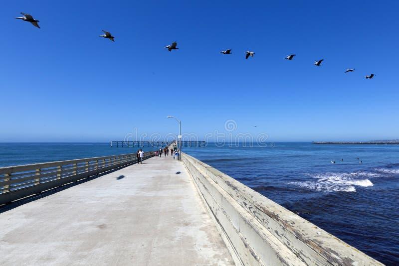 LES Etats-Unis - Pilier de plage de la Californie - de San Diego Ocean une migration de pélican photo libre de droits