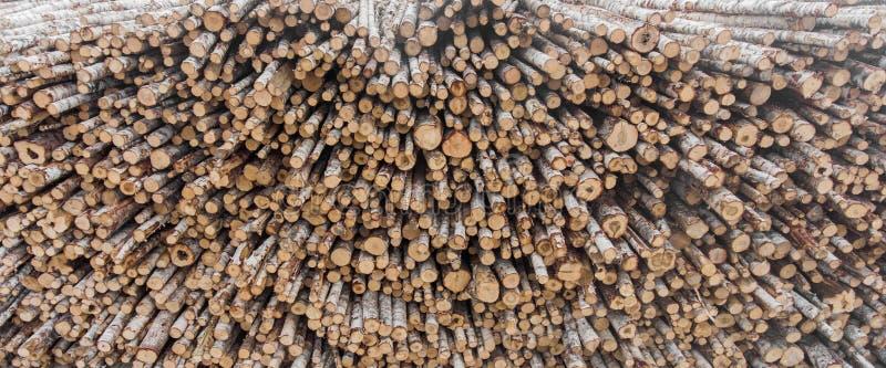 Les extrémités des rondins de bouleau empilés dans une pile photo stock