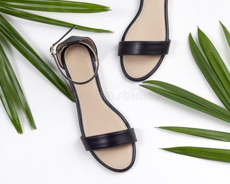 Les femmes échouent les sandales plates en cuir noires sur le fond blanc encadré avec les feuilles tropicales photo libre de droits