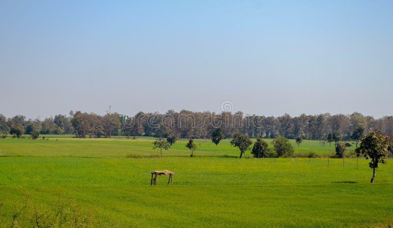 Les fermes de vert images libres de droits
