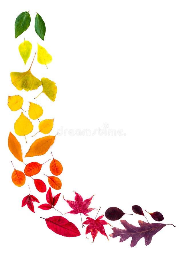 Les feuilles colorées ont arrangé dans le coin de L-forme photo libre de droits