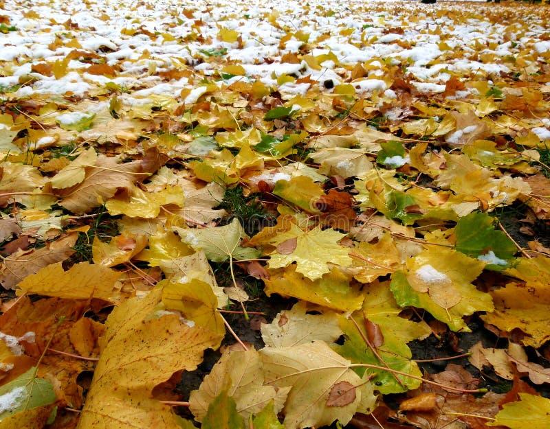 Les feuilles d'automne colorées et enneigement le pré photo libre de droits