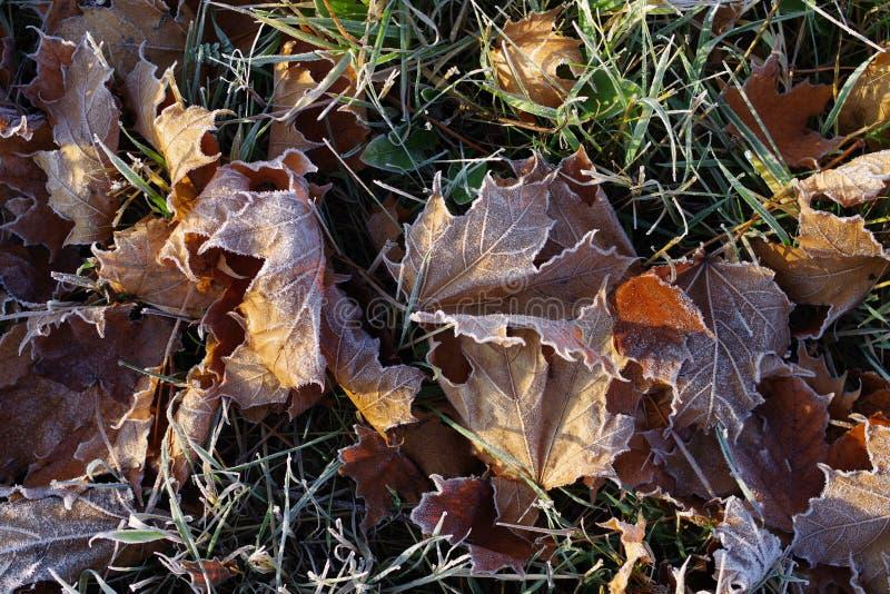Les feuilles d'automne givrent l'herbe congelée images stock