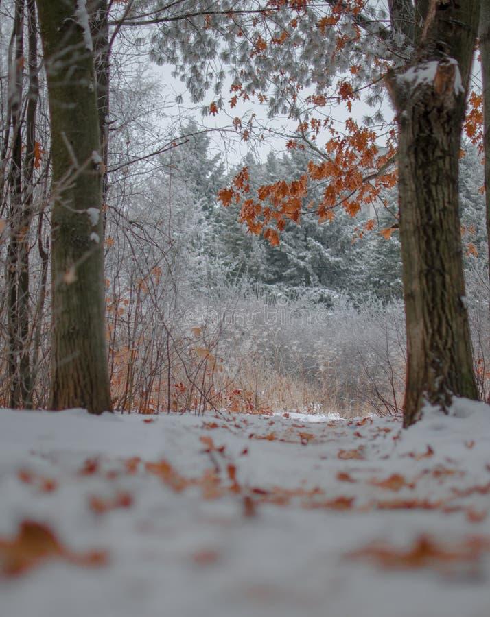 Les feuilles d'automne sur des arbres en hiver aménagent en parc images stock
