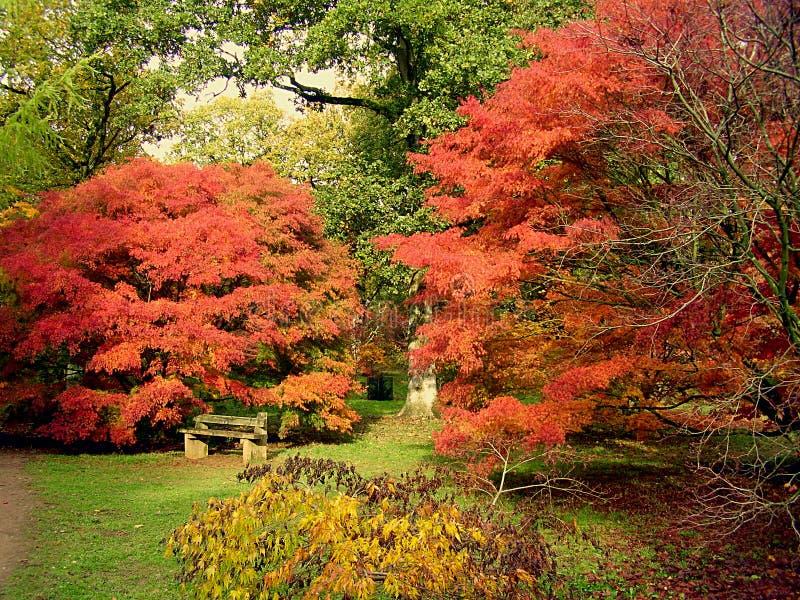 Les feuilles d'automne tombées entourent un banc rustique images stock