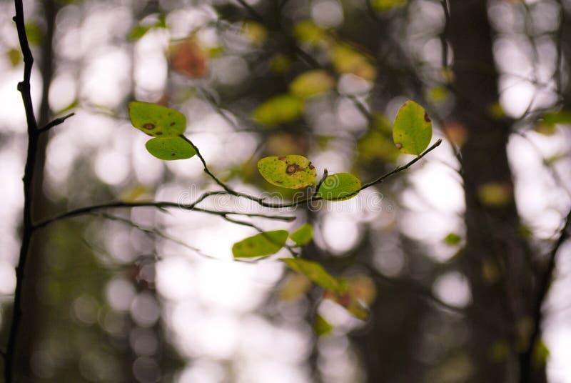 Les feuilles de bout image stock